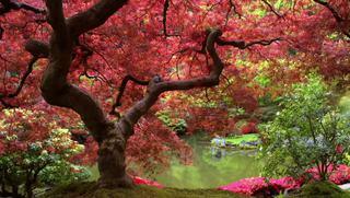 Jarabe Tos