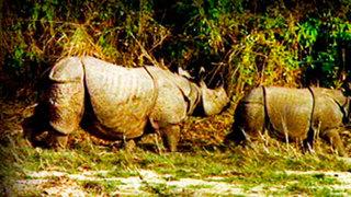 El Rinoceronte Indio. Tras las Huellas del Unicornio