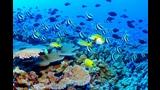 Breve paseo por el fondo del mar