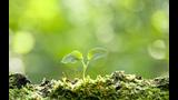 En la mente de las plantas, (Odisea)