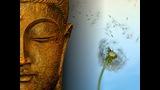 Meditación en la India