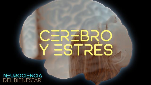 ¿Cómo gestiona nuestro cerebro el estrés?